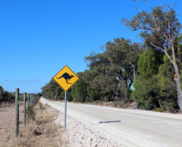 Free photo Australia, Kangaroo, Road, Shield – Free Image on Pixabay – 2282288 _2018-01-30_20-27-01